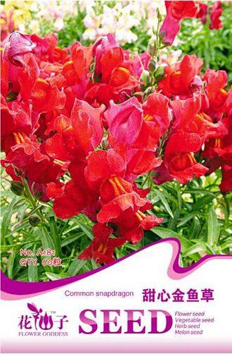 Red Baby Snapdragon Seeds, Original Pack, 60 Seeds / Pack, Toadflax Lunaria Flowers #A181(China (Mainland))