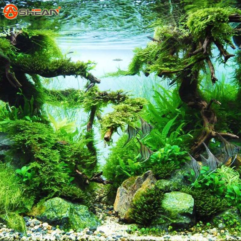 500 pcs / Bag Aquarium Grass Seeds Water Grasses Random Aquatic Plant Grass Seeds Indoor Beautifying Plant Seeds(China (Mainland))