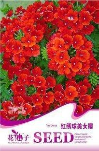 Semillas de flores de hortensia rojo verbena verbena red - Semillas de hortensias ...