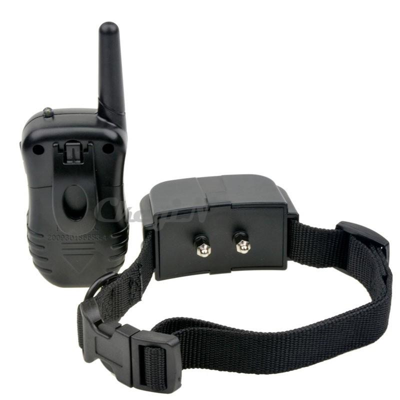dog collars store