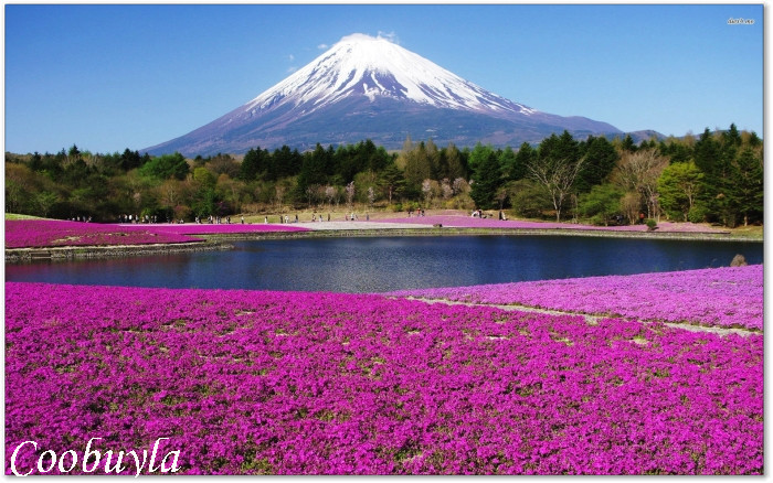 Large Realistic Flower Landscape Oil Painting Beautiful Mount Fuji Modern Wall Canvas Art Cool Home Decor - Coobuyla Store store