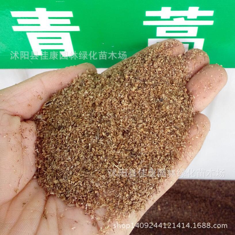Annua Seeds Artemisia Annua Seed Lin