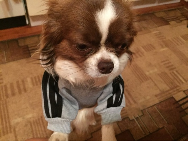 Pet Puppy Dog  Clothes Coat  Hoodie Sweater Costumes Size S M L XL XXL 7 Colors Available Free Shipping