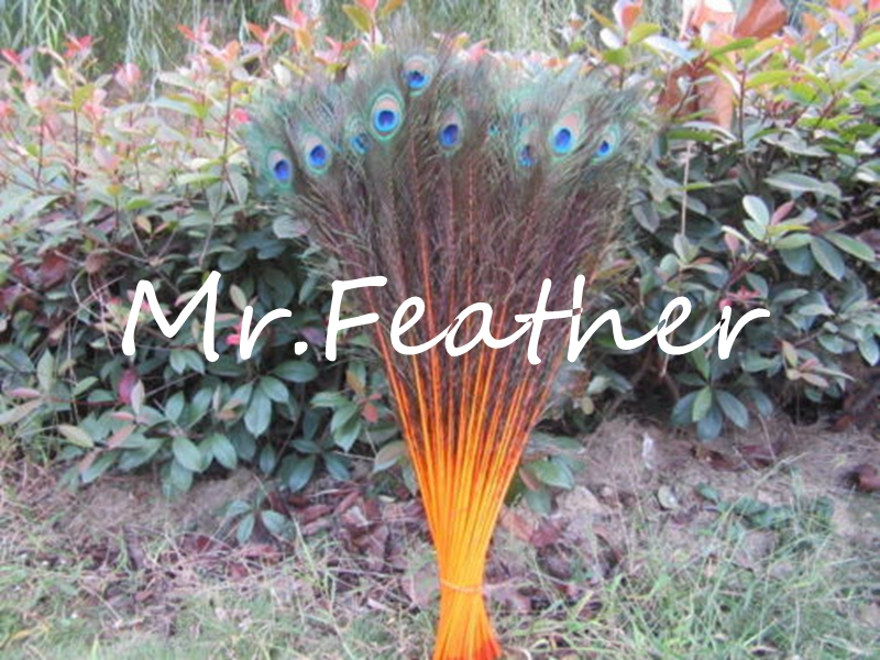 EMS Free Shipping 200pcs Orange Peacock tail Feather 80-90cm 30-35 inch Peacock Plumes For Party,Wedding Decorations(China (Mainland))
