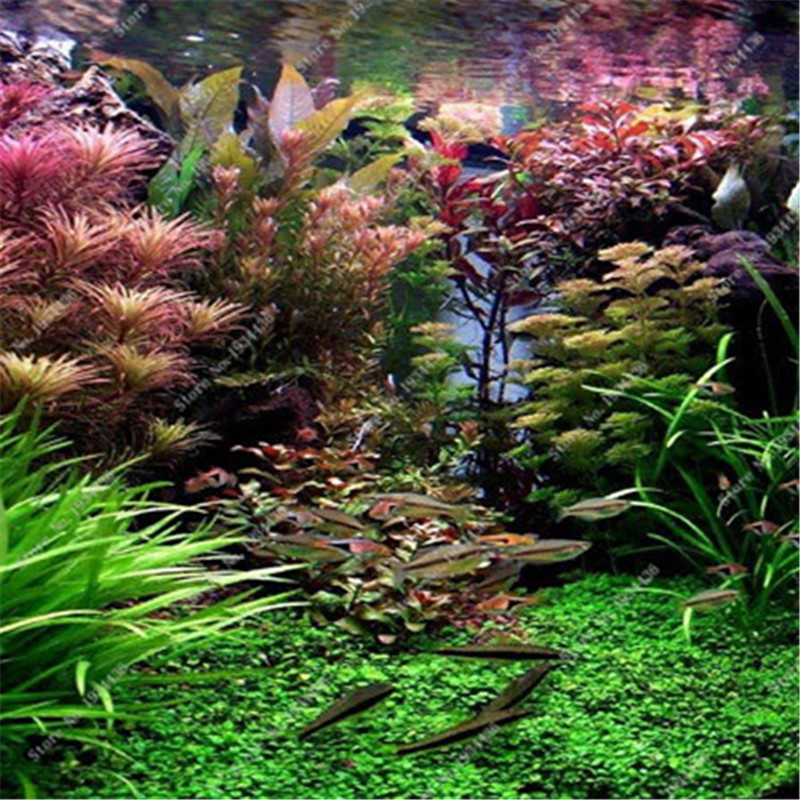 Online get cheap indoor water plant for Cheap pond plants