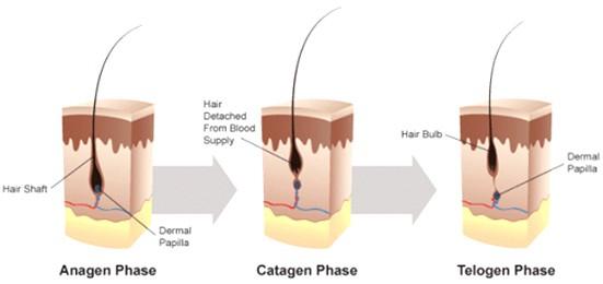 hair-phase-1