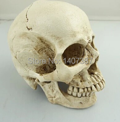 New arrival human skull decoration Halloween Props resin head skull model(China (Mainland))