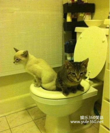 Best way to toilet train a cat