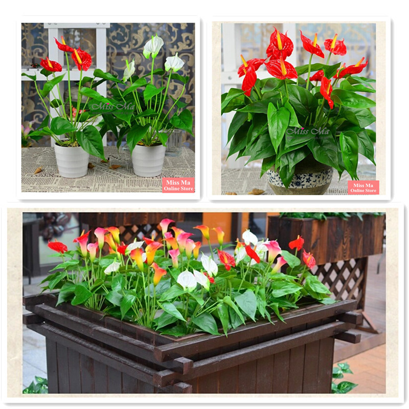 Wholesale 100 Bouquets Anthurium Latex With Leave Root Calla Real Touch Wedding Display Flower Outdoor Flower Wholesale(China (Mainland))