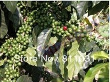 Hot selling 1000g 2 lb Green coffee beans China YUN NAN small coffee beans Free shipping