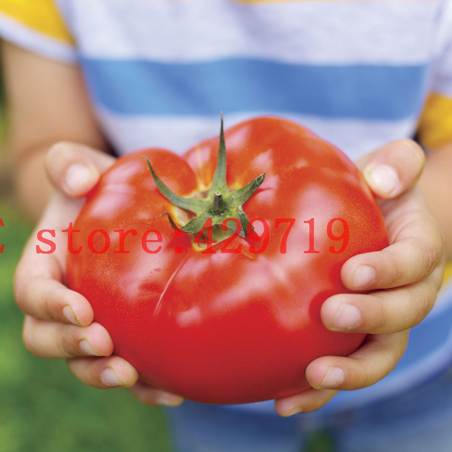 Гаджет  200 pcs Big Beef Hybrid Tomato Seeds giant tomato vegetable and fruit seeds for home garden NO-GMO buy-direct-from-china  None Дом и Сад