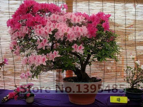 10pcs/bag decoration garden home, bloom tree seeds, flower seeds  -  Flowers Goddess store