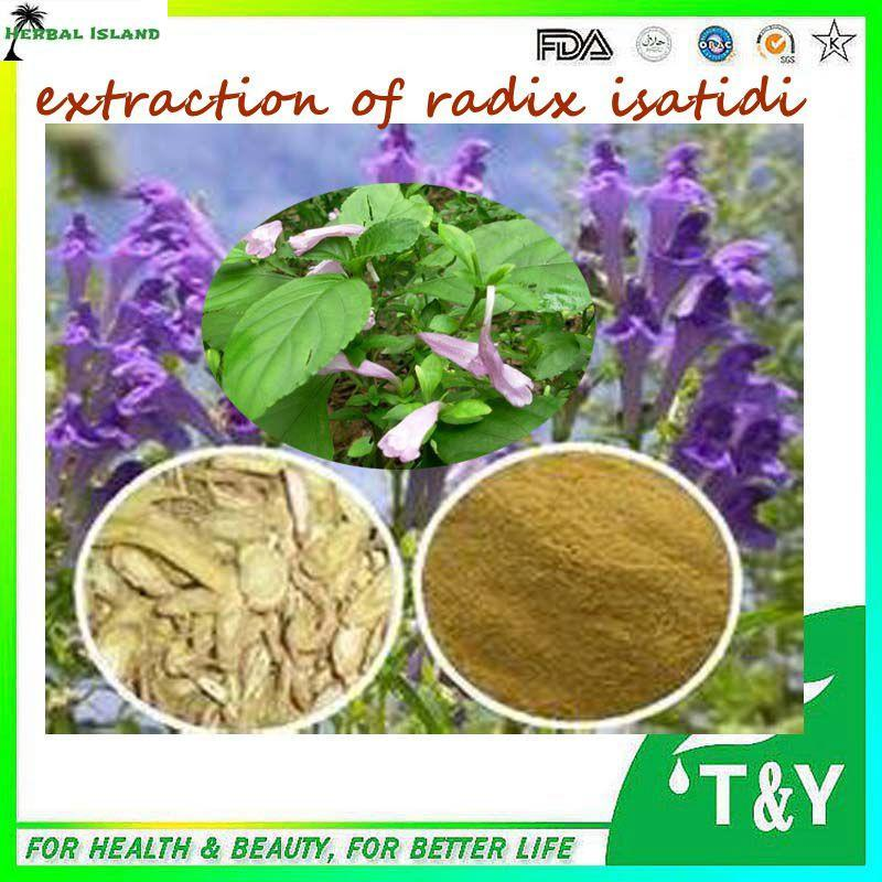 Natural Anti-virus Indigowoad Root Extract / Radix Isatidis Extract Powder