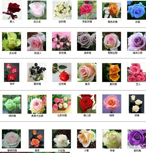 22 colors rare rainbow rose flower seeds Multi - color Plant Home Garden bonsai colorful gaisheng guo's store