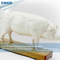 CMAM A07 Pig Acupuncture Model Animal Acupuncture Models