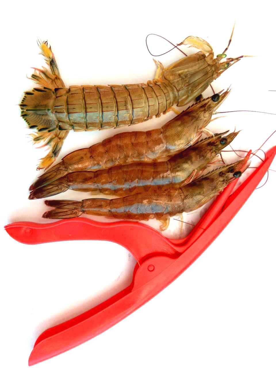 crevettes cuisine promotion achetez des crevettes cuisine promotionnels sur. Black Bedroom Furniture Sets. Home Design Ideas