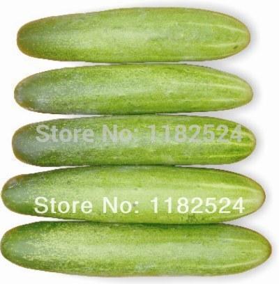 India Zia F1 Cucumber Seeds Fruit Vegetables Seeds (30 SEEDS)(China (Mainland))