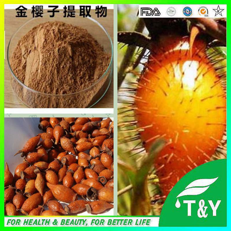 Hot sale Plant extract Cherokee rose fruit extract/Fructus Rosae Laevigatae extract/Rosa