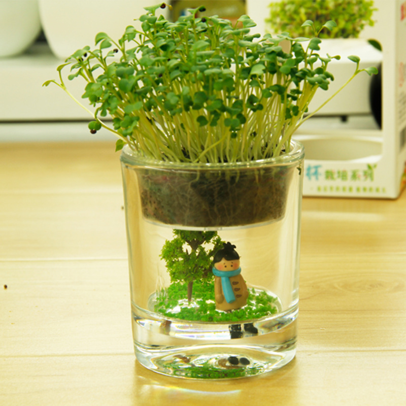 Miniature Potted Plants Indoor Cup Fairy Radiation Desktop
