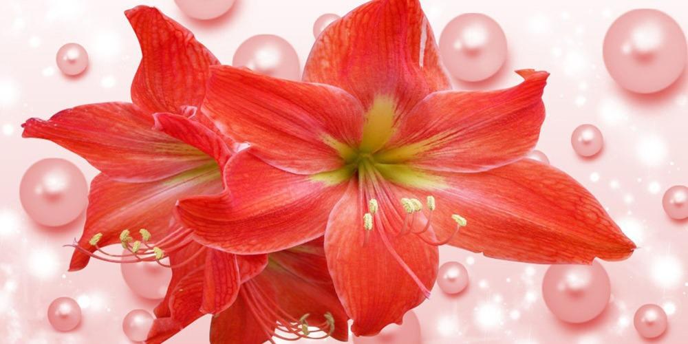 La pianta da fiori