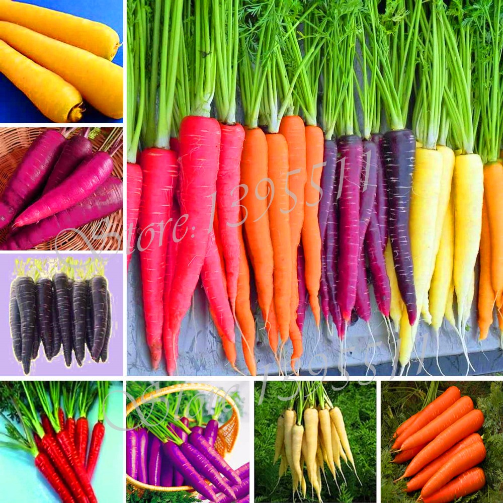 100pcs carrot seeds,fruit vegetable seeds,9 colours to choose,sweet and healthy,plant for home & garden free shipping(China (Mainland))