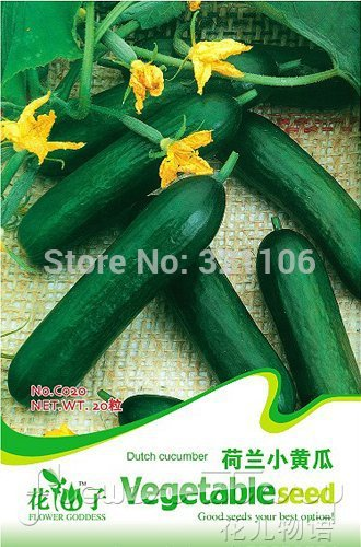 1 Pack 300+ Seeds Heirloom Healthy Organic Vegetable Holland Mini Cucumber Seeds C020(China (Mainland))