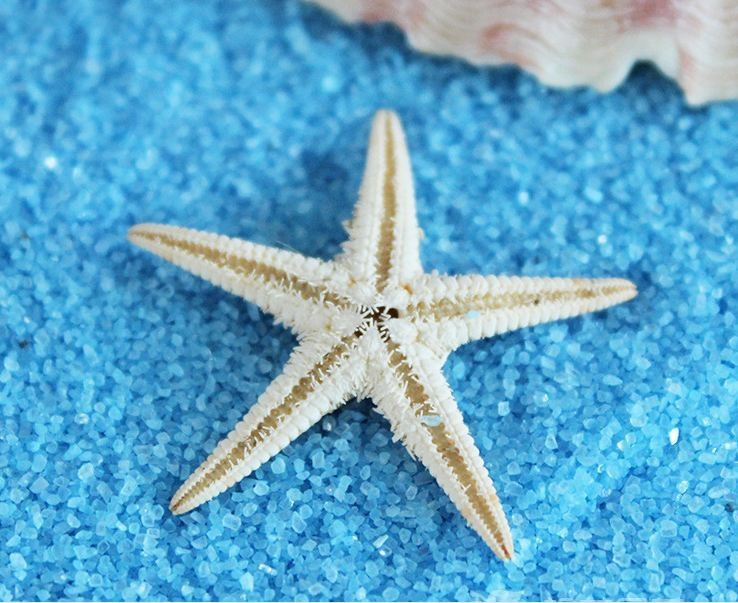 1000PCS2.5-3CM Micro landscape natural sea star really starfish seashell conch wholesale dress up sea small place(China (Mainland))