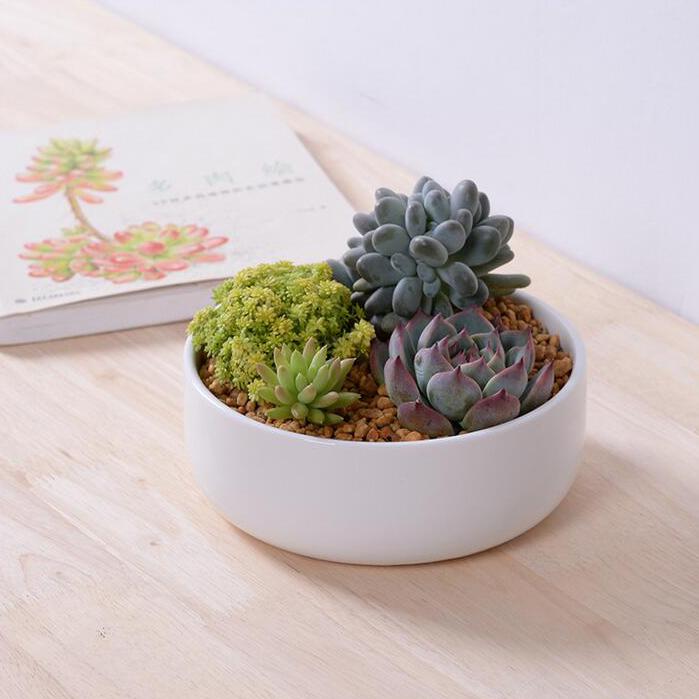 Acquista all'ingrosso Online ceramica interni fioriere da ...