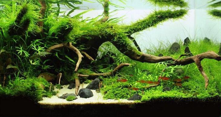 ... fish-tank-aquarium-plants-aquarium-decoration-Malaysia-fish-tank