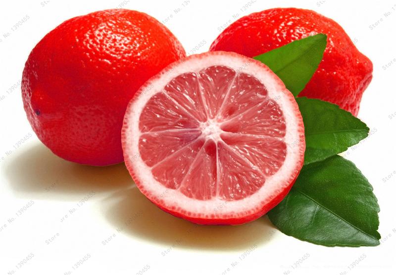 Buy 10pcs rare rainbow lemon seeds for Buy lemon seeds online