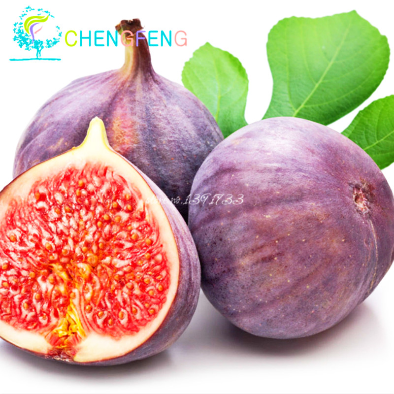 5pcs/lot Top Fashion Promotion Outdoor Plants Plants Fruit Seeds Ficus Carica - Rare Fig Seeds Edible Fruit Tree / Plant(China (Mainland))