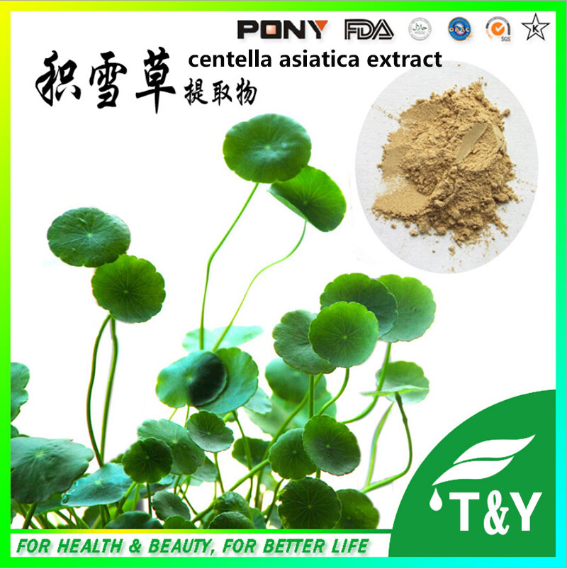 2015 Hot Sale Hight Quality Centella Asiatica Extract with Asiaticoside 700g/lot<br><br>Aliexpress