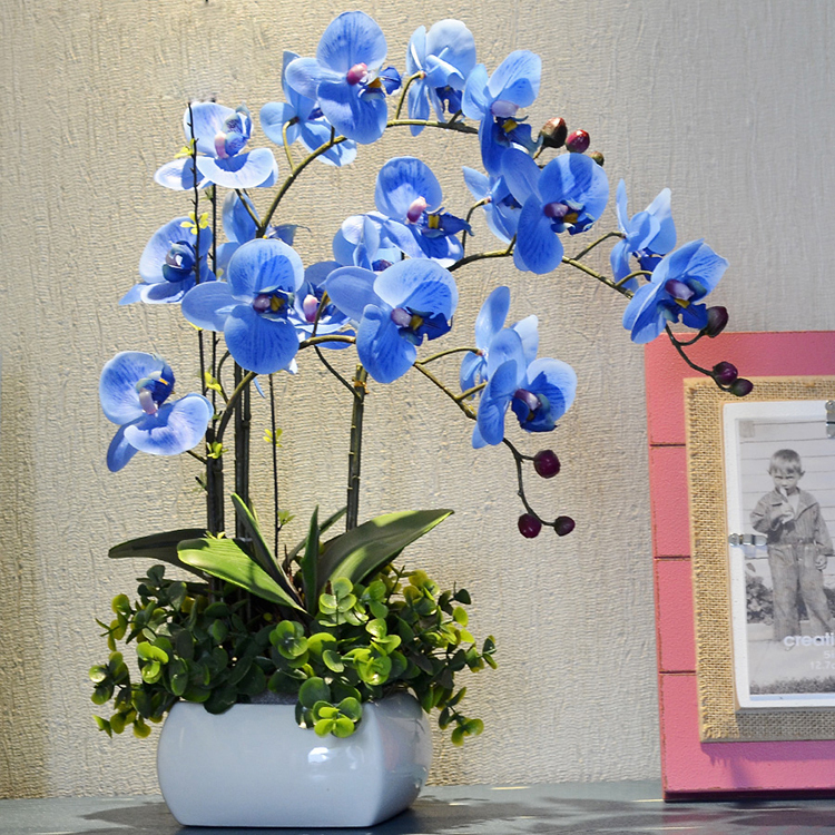 Rare Orchid Bonsai Balcony Flower Blue Butterfly Orchid Seeds Beautiful Garden Phalaenopsis Orchids Seeds 200 PCS