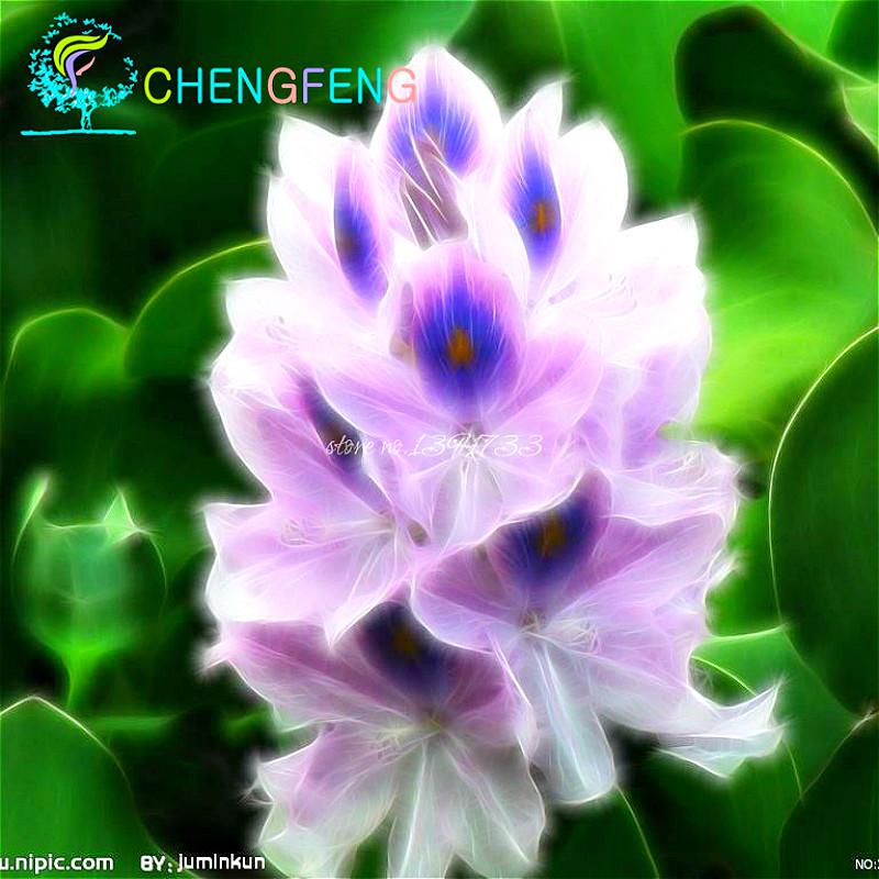 Phoenix jardin promotion achetez des phoenix jardin for Envoyer des fleurs pas cher livraison gratuite