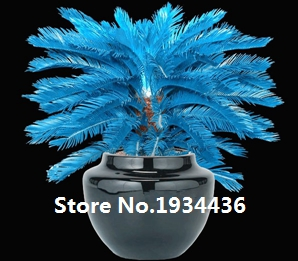 Hot Sale!!! Rare Blue Cycas seeds, Sago Palm Tree, bonsai flower, the budding rate 98% potted plant for home garden, 100pcs/ bag(China (Mainland))