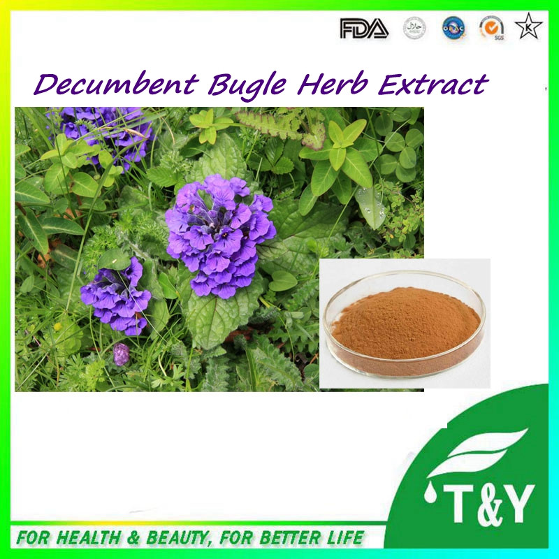 GMP Standard Manufacturer Supply Decumbent Bugle Herb Extract powder with best price 1000g/lot(China (Mainland))