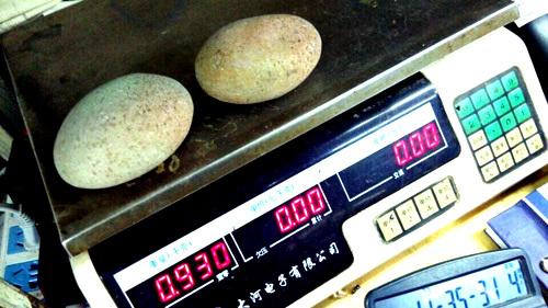 Manufacturers, wholesale natural stone large luminous stone wool weight legendary luminous pearl fluorite fluorite mine(China (Mainland))