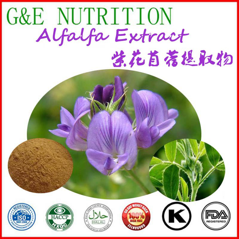 100% natural hot sale alfalfa extract 600g