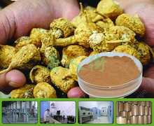 Buy 200g organic Maca extract powder / Lepidium meyenii Free for $19.58 in AliExpress store