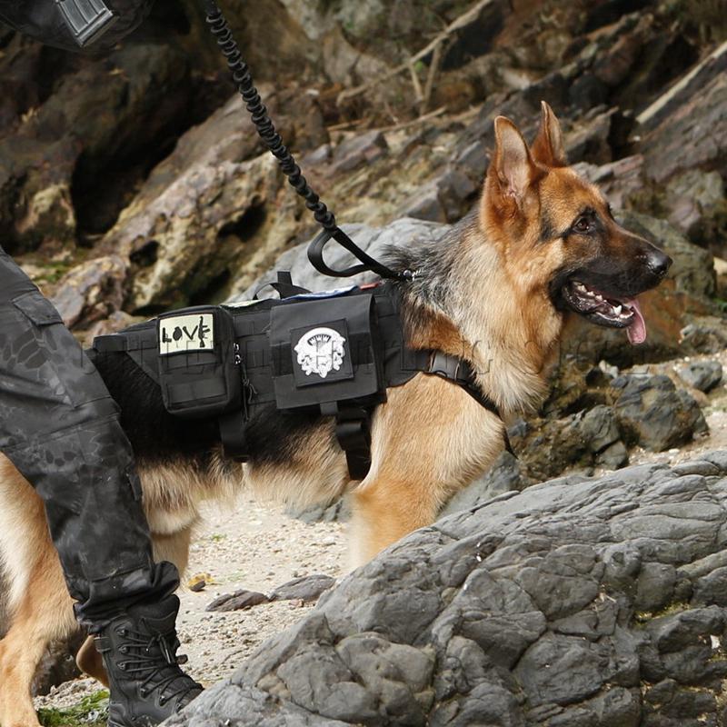 Name Brand Hunting Dog Wear