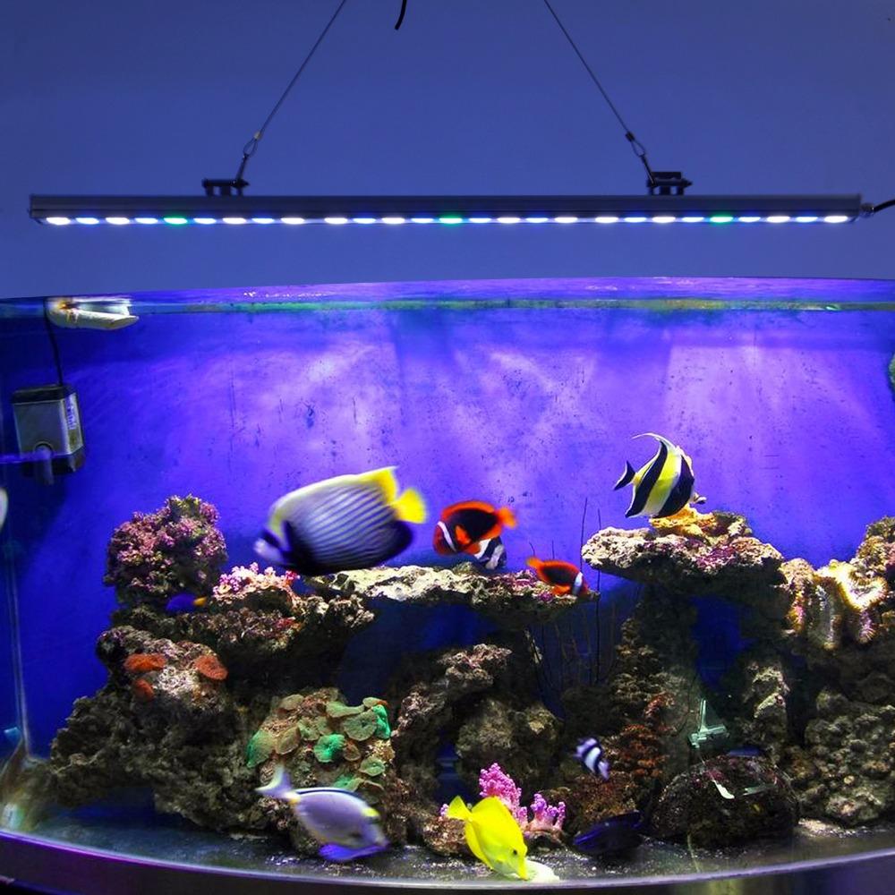 Beau r cif r servoir promotion achetez des beau r cif for Vendeur aquarium