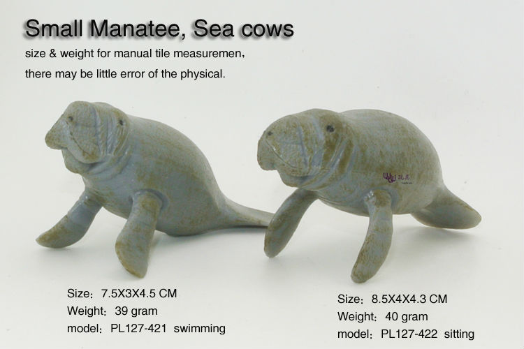 a study on the manatee or the sea cow