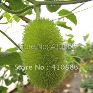 free shipping Brand Flower goddness decorative cucumbers seeds 30 pieces one pack original package