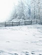 Frozen Photo Studio Floor The Fence Empty Far Forest Christmas Backgroundszz 1958