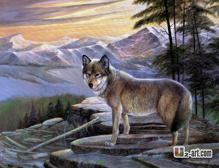 Oil on canvas prints fiercful wolf canvas prints gift for client photo and wall art for home and oofice decoration(China (Mainland))