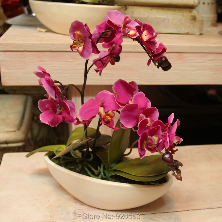 Buy phalaenopsis one set flower vase for Angela florist decoration