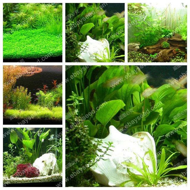 aquarium grass seeds (water grasses random) aquatic plant grass seeds family easy plant seeds - 500 PCS(China (Mainland))