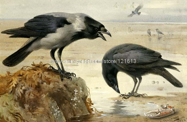 Archibald Thorburn Hooded Crow And Carrion Crow Claw Beach Birds Hand Painted Canvas Wall Art