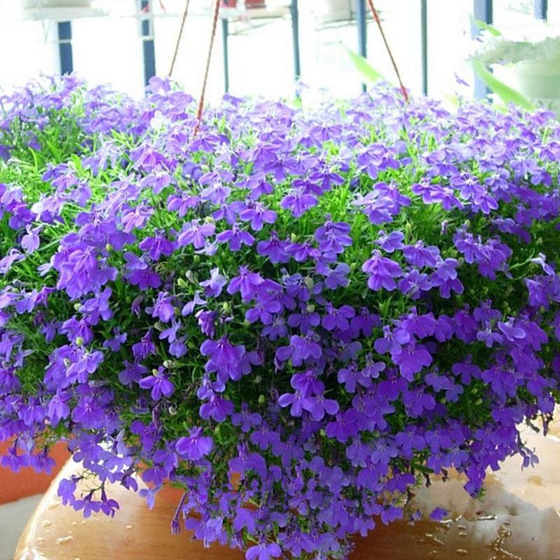 Fioriera in ombra fiorita tutto l 39 anno forum di for Piante da balcone tutto l anno