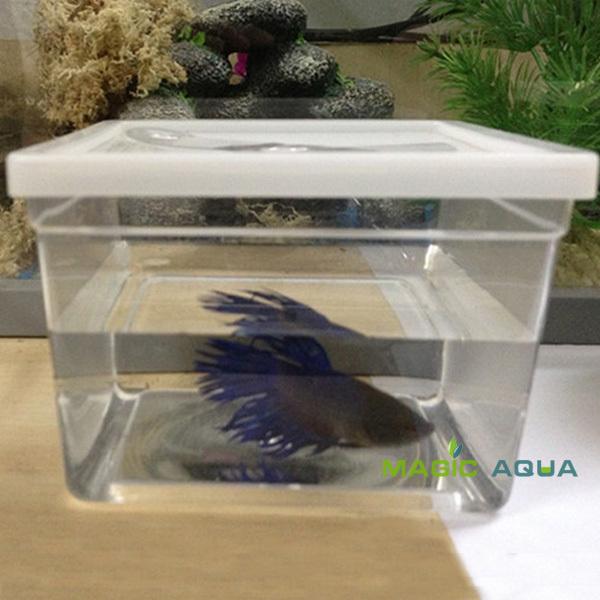 Achetez en gros aquarium betta en ligne des grossistes for Vente aquarium en ligne